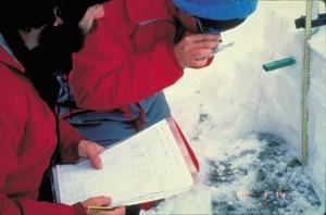 Determinació dels grans de neu en el perfil estratigràfic