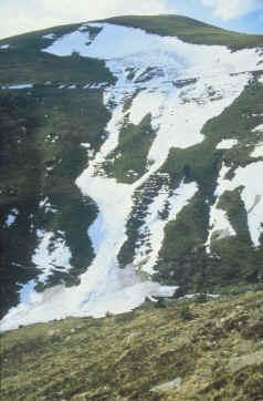 Allau de Fontelletera. A la part alta es pot observar el traçat de la pista (Foto: Montserrat Mases) P>